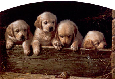 a-day-at-the-races-yellow-labrador-puppies-2386