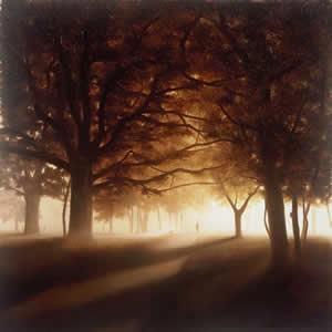a-walk-through-the-park-4806