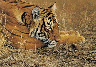 always-alert-tiger-2290