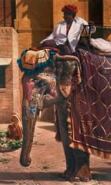 amber-lady-elephant-3507