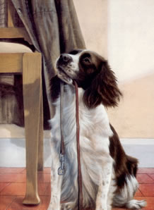 anticipation-springer-spaniel-3600