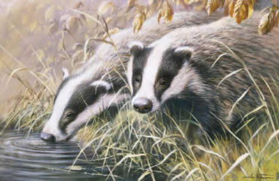 Autumn Morning - Badgers by Ian Nathan