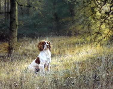 awaiting-orders-springer-spaniel-1211