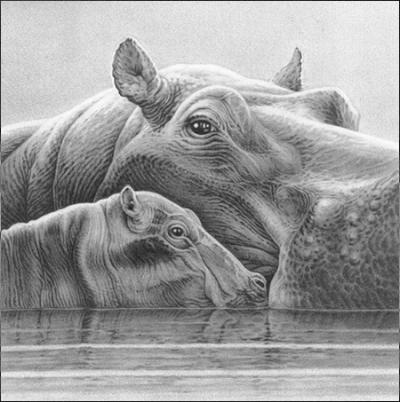 baby-love-hippos-11813