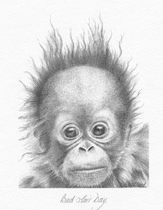 bad-hair-day-orangutan-1358