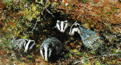 badgers-2874