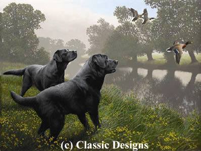 Bank Raiders - Black Labradors