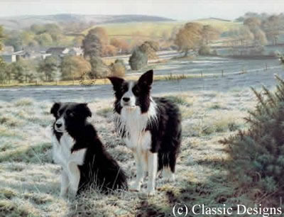 best-friends-border-collies-7227