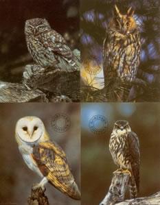birds-of-prey-set-of-4-1242