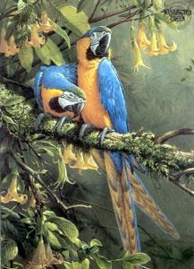 blue-gold-macaw-parrots-2392