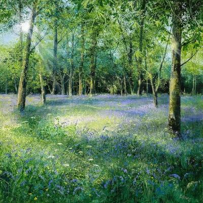 Bluebells in the Glade