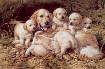 bottoms-up-golden-retriever-puppies-2399