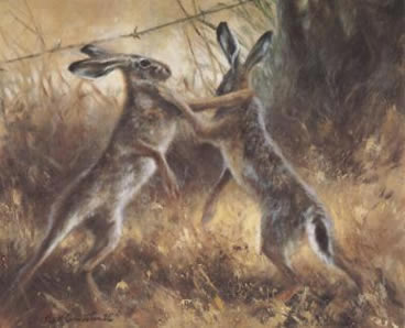 boxing-hares-4040