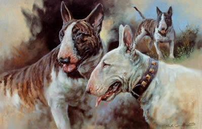 bull-terriers-3919