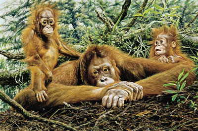 but-this-is-our-home-orangutans-2302