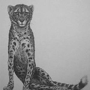 cheetah-13602