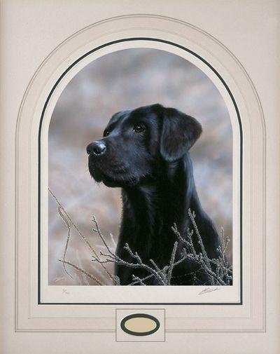 classic-breed-black-labrador-2654