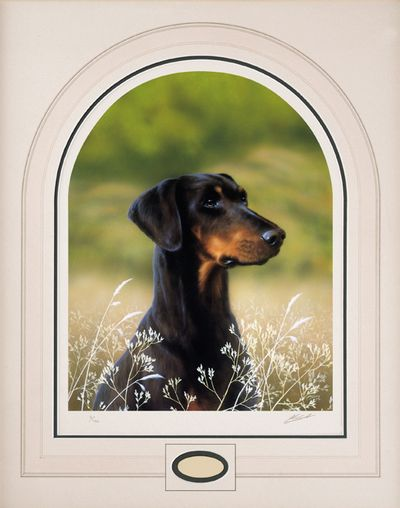 classic-breed-dobermann-2660