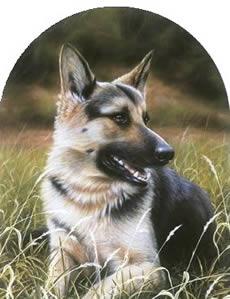 Classic Breed German Shepherd