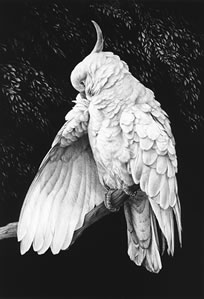 cockatoo-ii-3894