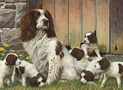 dads-army-springer-spaniels-3857