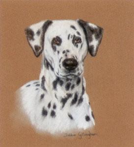 dalmatian-study-3009