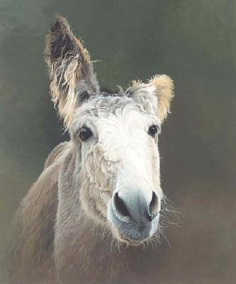 Des - Donkey