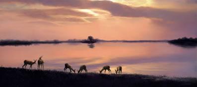 elegance-of-evenings-retreat-impala-antelopes-5073