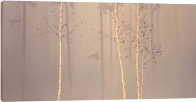 enchanted-woods-i-6050