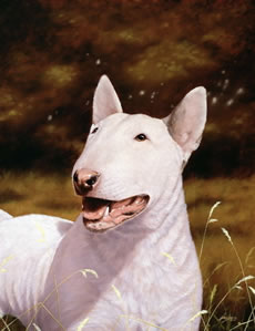 english-bull-terrier-2678