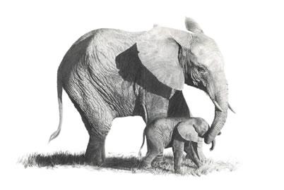 First Steps- Elephants by Wendy Corbett