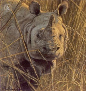 five-faces-of-india-great-indian-rhinceros-2538