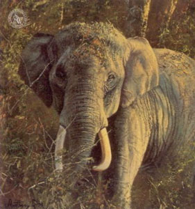 five-faces-of-india-indian-elephant-2536