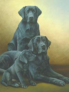 generations-black-labradors-3838
