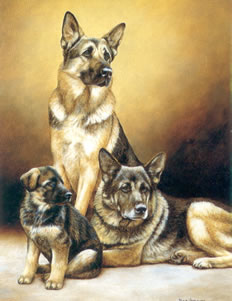 generations-german-shepherd-dog-1492