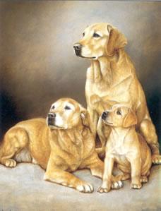generations-yellow-labradors-1493
