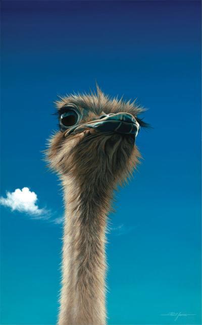Germaine - Ostrich