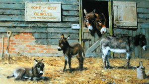 happy-home-for-donkeys-2886