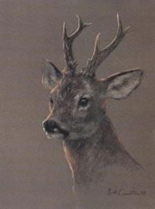 head-of-a-roe-deer-4037