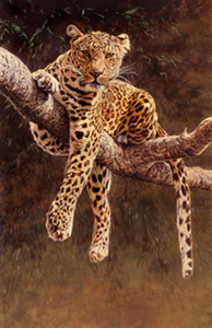 Hypnotic - Leopard by Alan Hunt