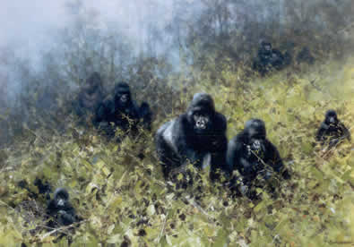 in-the-mists-of-rwanda-gorilla-4741
