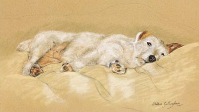 jack-russell-3042