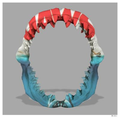 Jaws- Small