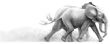 joy-elephant-3388
