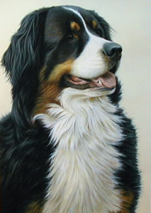 just-dogs-bernese-mountain-dog-5656