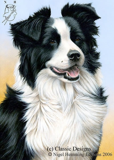 Just Dogs - Border Collie by Nigel Hemming