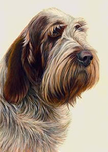 just-dogs-brown-roan-italian-spinone-5655