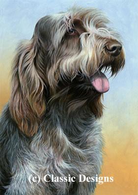 just-dogs-brown-roan-italian-spinone-ii-7305