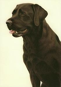 Just Dogs - Chocolate Labrador