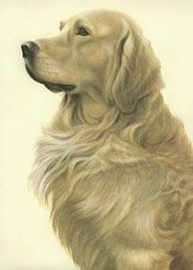 Just Dogs - Golden Retriever